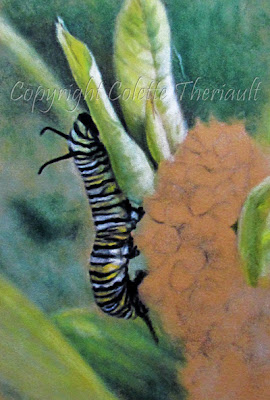 caterpillar, insect and butterfly paintings in pastel by Wildlife Artist Colette Theriault
