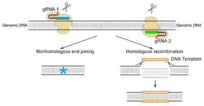 The Trenches of Discovery: The future is now! The rise of genome editing