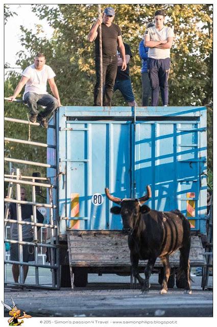 Corsa camarghese toro liberato