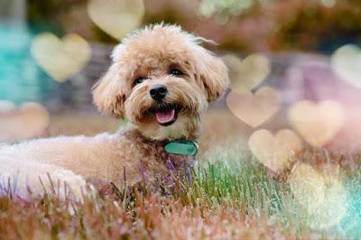 imagenes perritos, imajenes de perro, ver imágenes de perros, imagenes de perros graciosos, imagenes bonitas de perritos