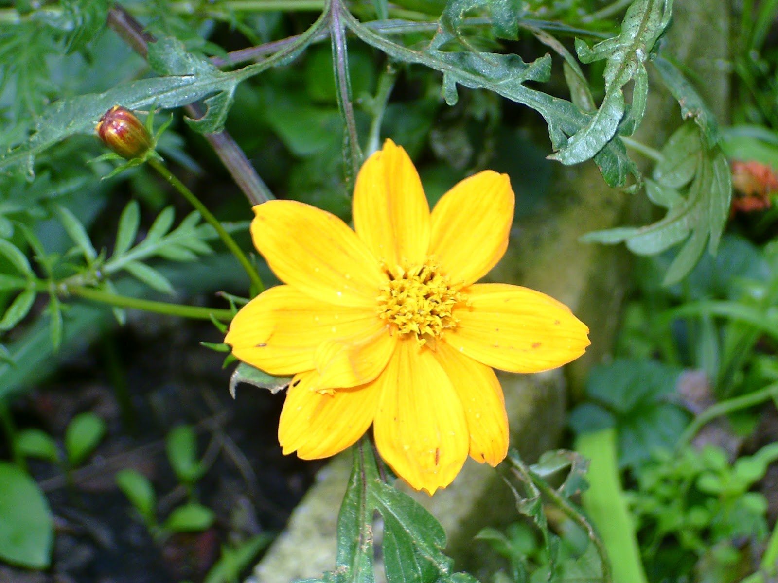 Good Morning Yellow Flower Images Top Colection For Greeting And
