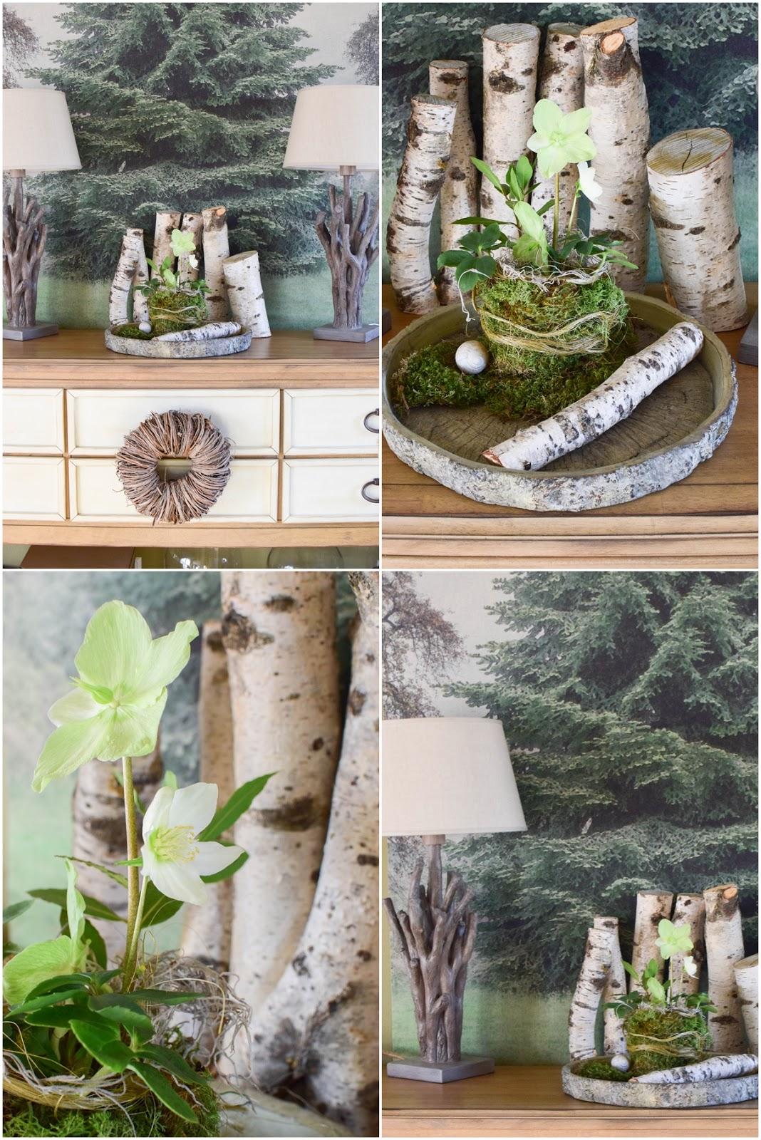 DIY Moos Übertopf selbermachen. Frühling Deko Dekoration mit Christrose, Moos und Birke. Deko mit Natur für Tisch, Sideboard und Konsole
