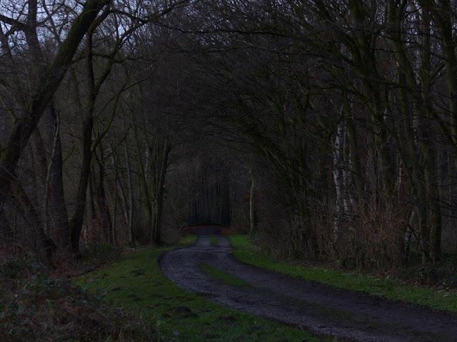 Hunderunde Wanderung Schwerte Ruhr Januar Winter Gesellschaftskater Rundweg Depression
