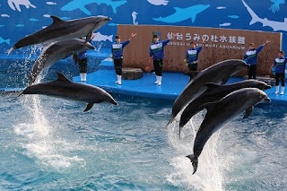 Performances of dolphins and sea lions