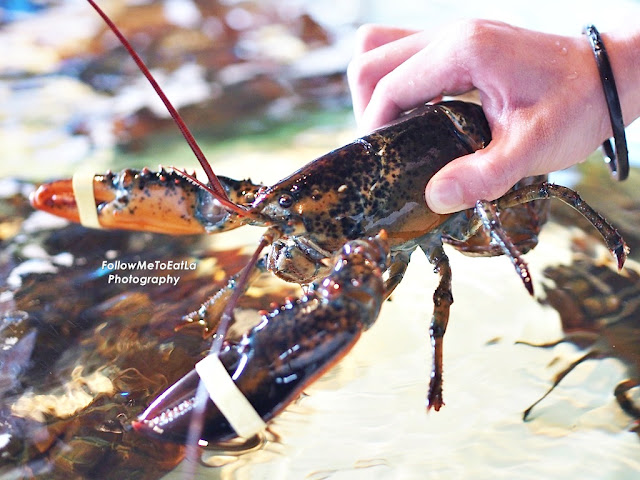 Canadian Lobster  RM 988++ 3Kg+-