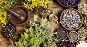 ما تود معرفته عن زراعة الأعشاب الطبية في المنزل