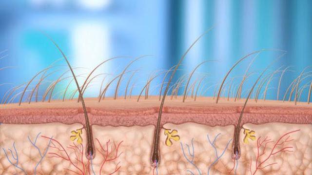 Ternyata Inilah Alasannya Mengapa Kita Harus Mencukur Rambut Kemaluan