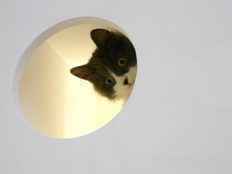 Catissa una casa modular para gatos