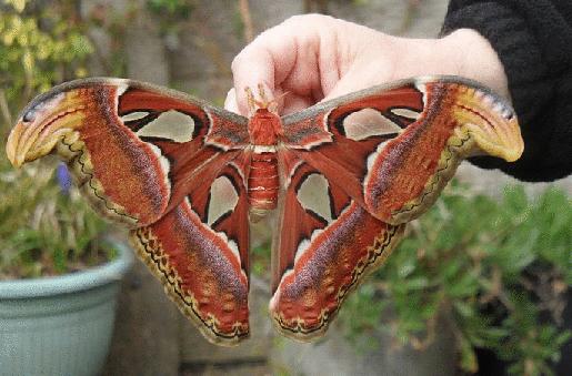 19 υπέροχες μεταμορφώσεις Λεπιδόπτερων