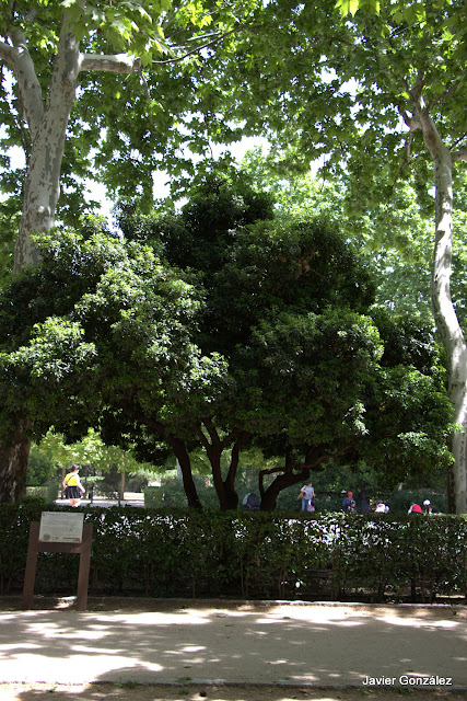 Parque del Retiro de Madrid. Itinerario 4. El Campo Grande.