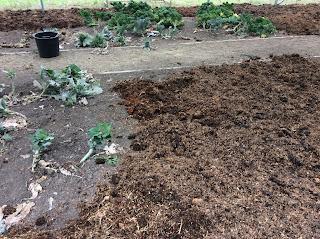 gardening, autumn gardening