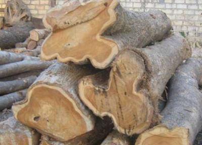 kayu jati rakyat (kampung)
