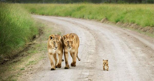 17 khoảnh khắc đáng yêu của các gia đình động vật trên thế giới