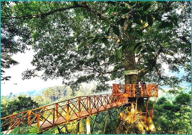 Rumah Pohon Curug Cipamingkis