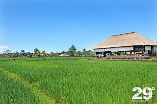 Warung Bali Sangeh (Bortom turiststråken del 3)