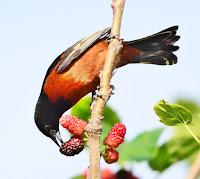 Avian Control