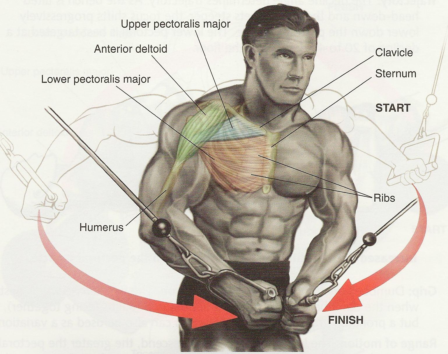 pectoral workouts