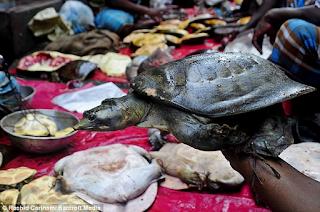 Άνθρωποι έφαγαν θαλάσσια χελώνα και πέθαναν από τροφική δηλητηρίαση