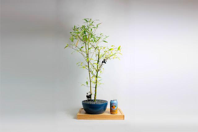 японское дерево бонсай, фото, дизайн интерьера