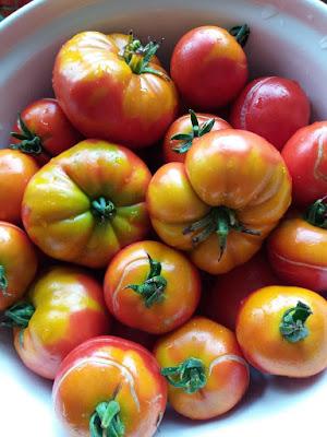 Marmande Heritage Tomatoes. HenSafe Smallholding.