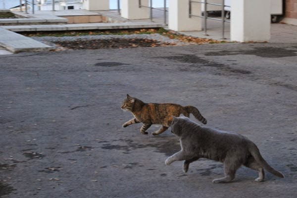 cats run