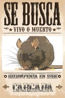 se busca rata