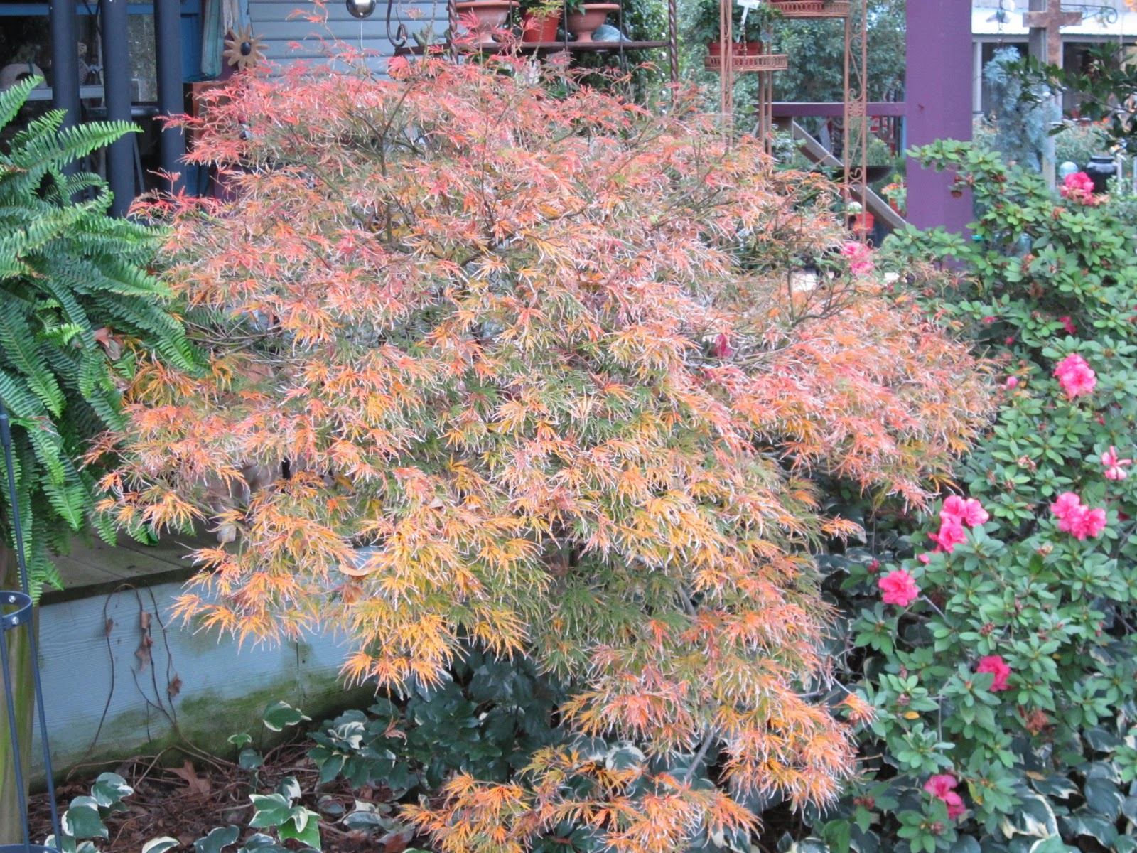 Garden Thymes Bright Fall Color