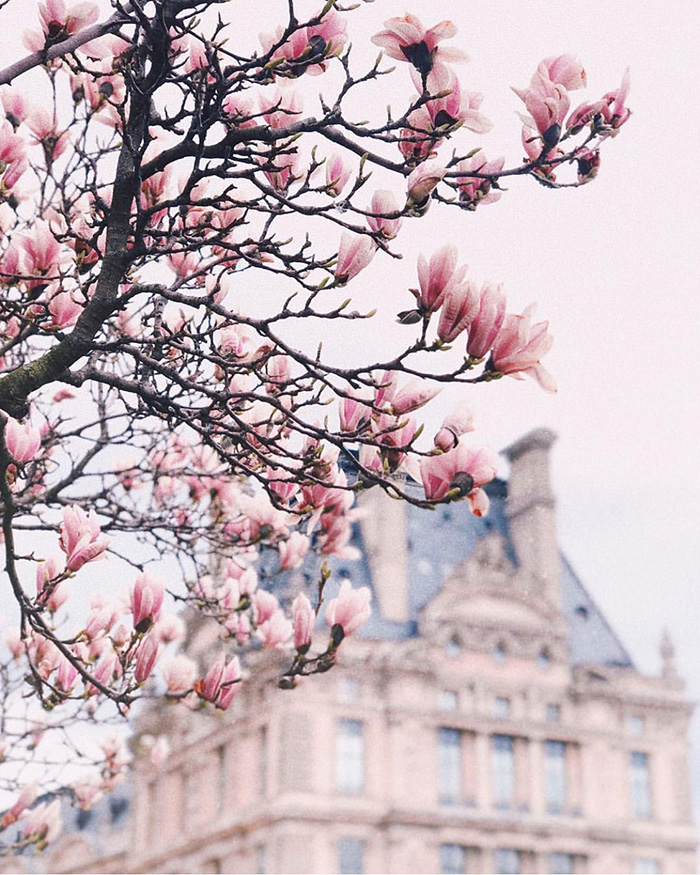 Paris in Spring by @alinakolot | Cool Chic Style Fashion