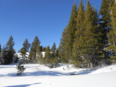 spiritual nature, spiritual strength, conifers, evergreen trees, blue sky, white snow