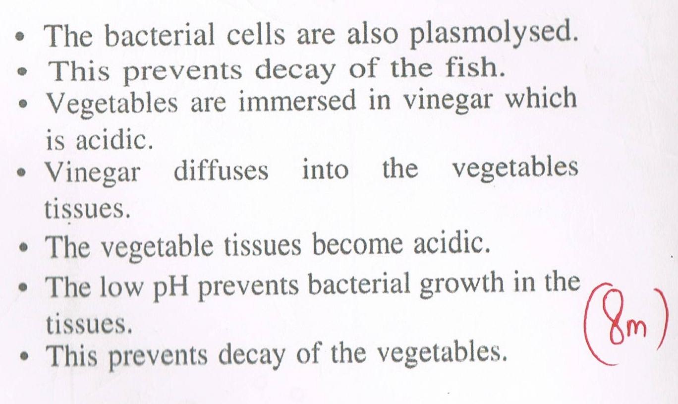 meiosis essays mitosis and meiosis essay example topics sample