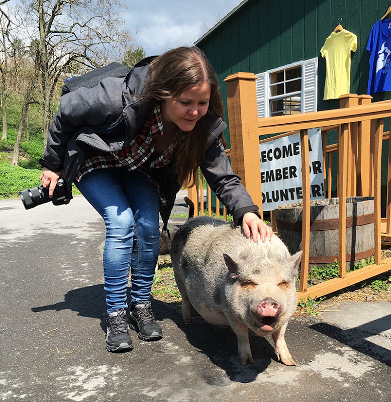 Veganreise New York Catskill Animal Sanctuary Mary Frances Happy Pig