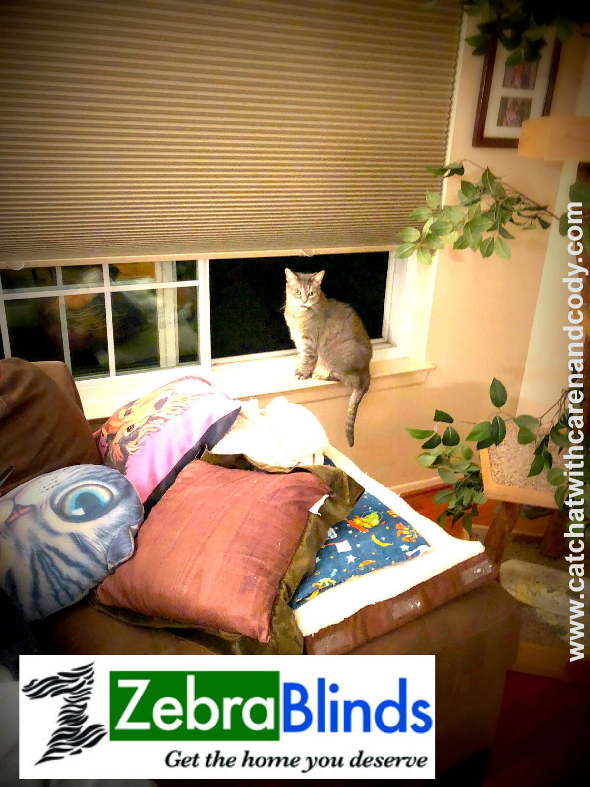I Can T Tell You How Cringe When See Photos Of Cats Lounging In Windows With Improper Window Treatments By Am Speaking