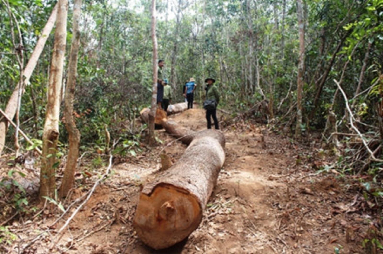 Gia Lai: Lâm tặc dùng súng, dao cướp gỗ tại bãi tập kết