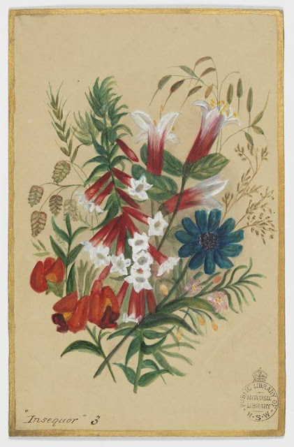 """Christmas Card design depicting Australian wild flowers with the words """"Insequor 3""""."""