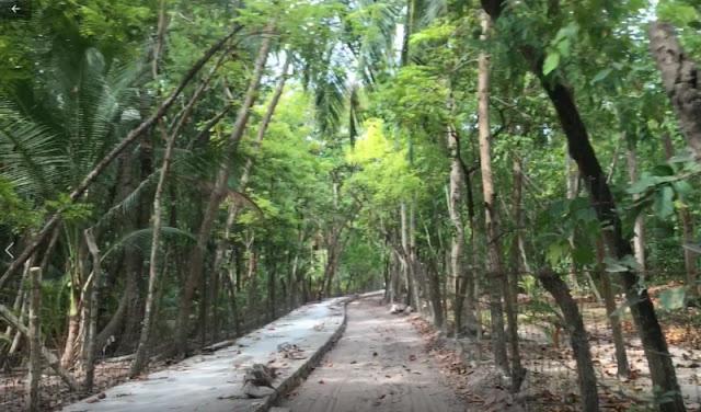 Maribagini Tree Olango Island