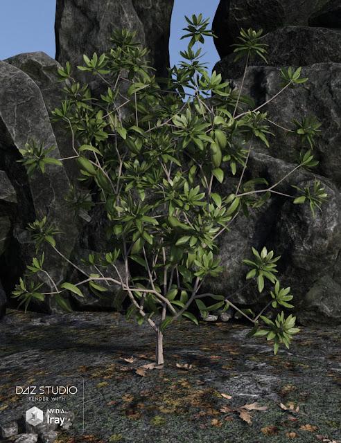 Dumor Scenics - Rhododendrons