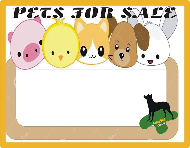 Pets For Sale