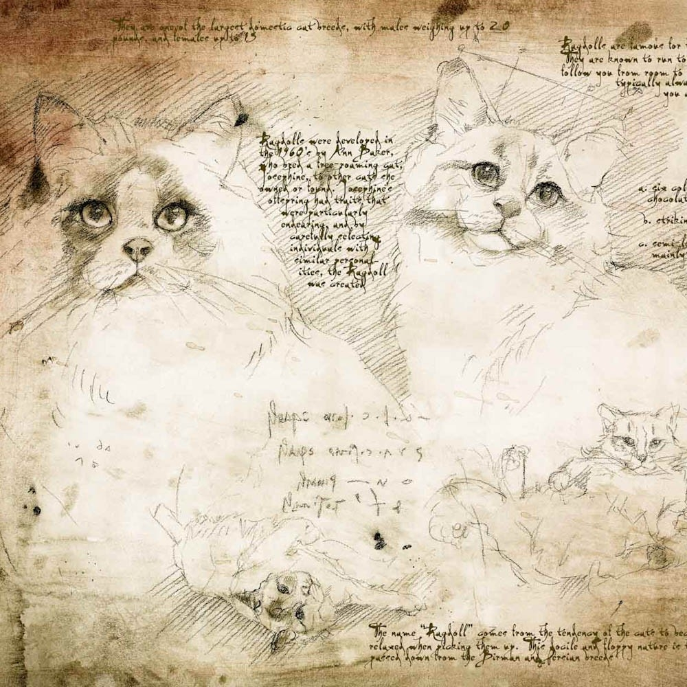 15-Ragdoll-Study-Leonardo-s-Dogs-Cats-and-Dogs-Drawn-in-the-style-of-Leonardo-da-Vinci