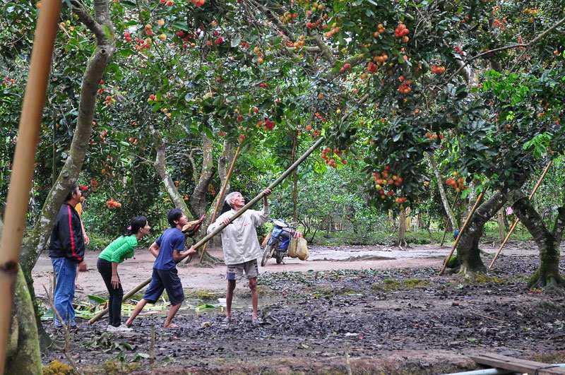 Kinh nghiệm du lịch Long Khánh, Đồng Nai: Vào vườn tham quan, hái trái cây ĂN ĐÃ THÈM