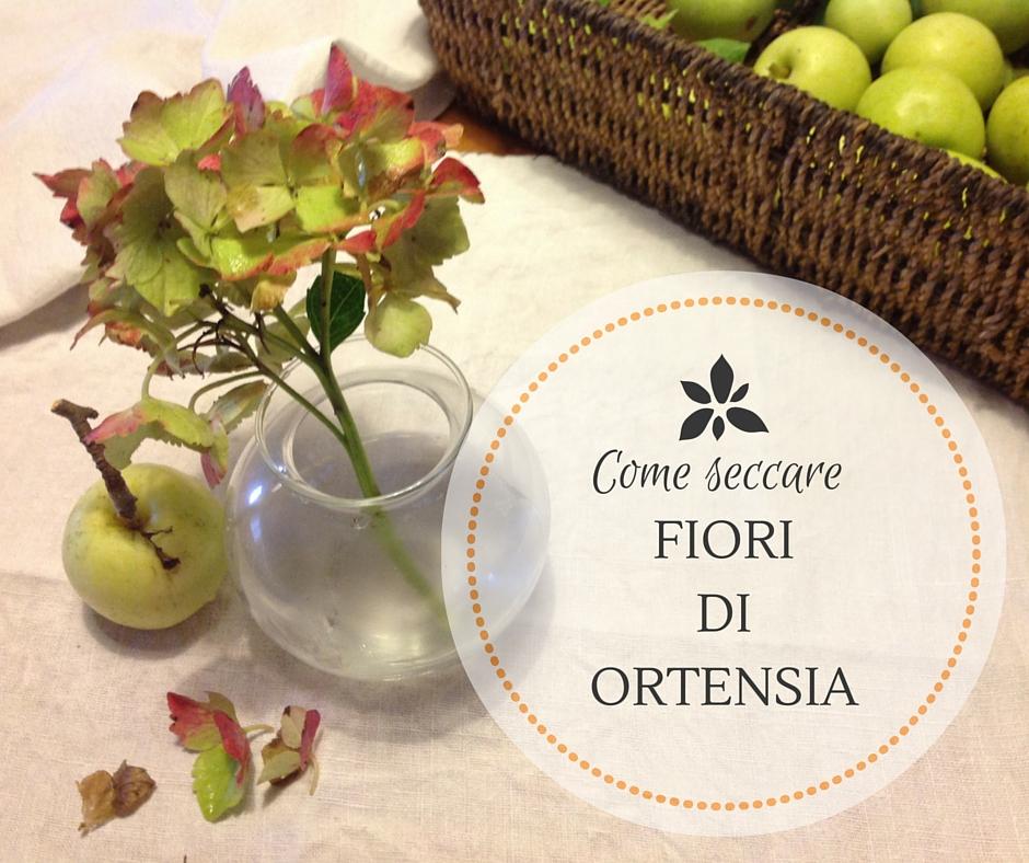 Come Seccare I Fiori Di Ortensia Hydrangea Macrophilla Un