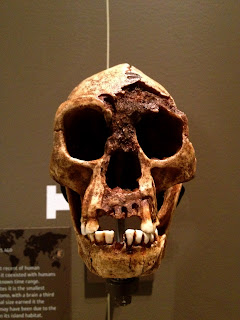 Skull, anthropology