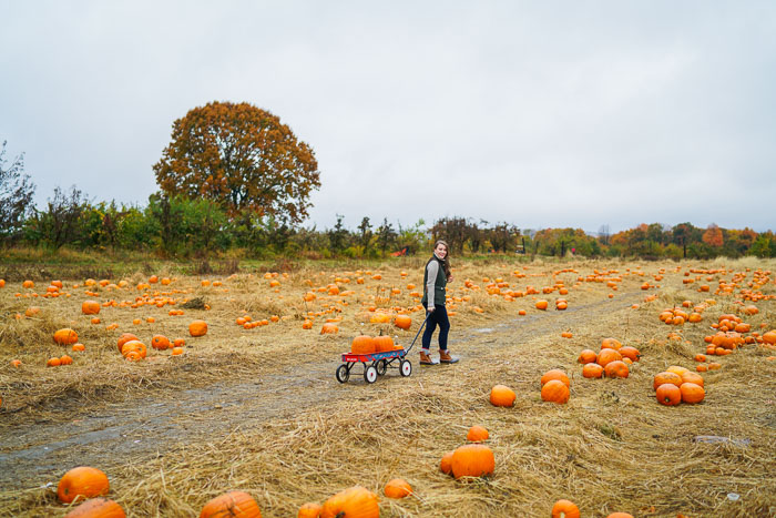 Krista Robertson, Covering the Bases,Travel Blog, NYC Blog, Preppy Blog, Style, Fashion Blog, Travel, Fall Outfits, Fall Style, What to Wear for the Fall, Pumpkin Picking,