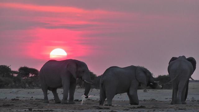 Nxai Pan National Park,Botswana