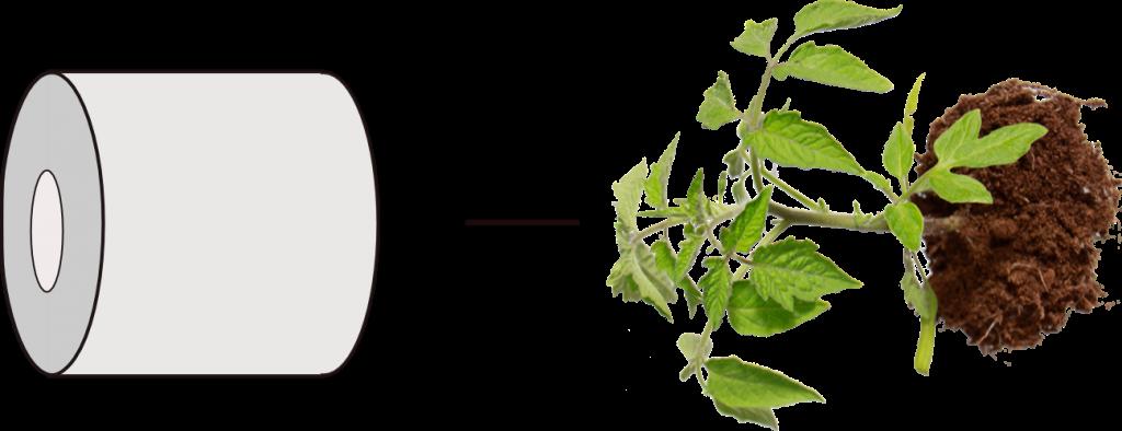 كيف نصنع حوض زراعة طماطم باستخدام عبوة مشروبات غازية؟