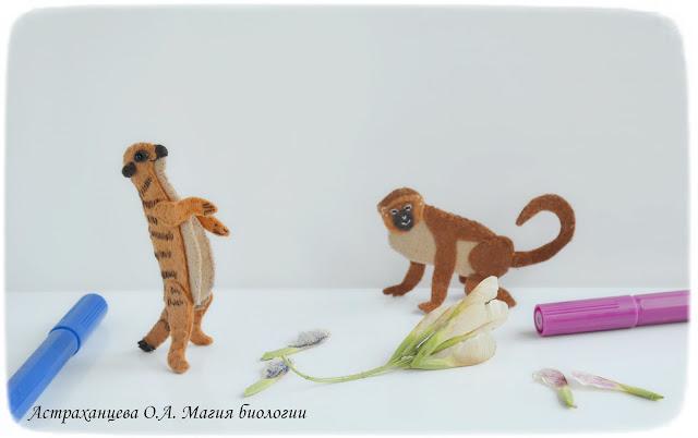 rasprostranenie-plodov-krylatki-klena-anemohorija-igra