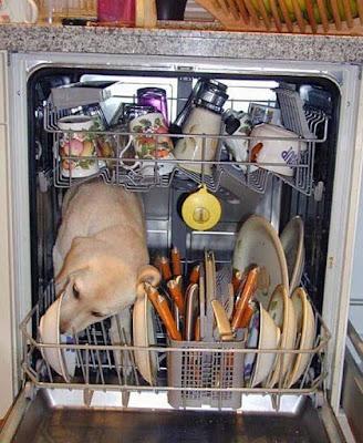 Abwaschen lustige Bilder - Hund im Geschirrspüler