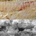 Fóssil de 520 milhões de anos apresenta o mais detalhado sistema nervoso já encontrado