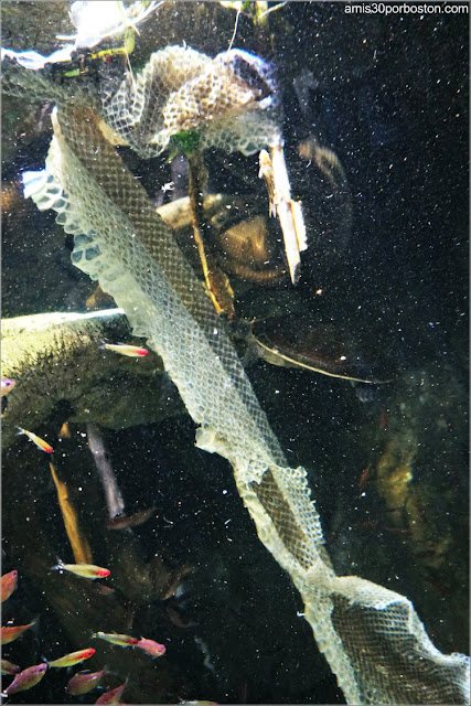 Piel de una Anaconda del Amazonas en el Acuario de Boston