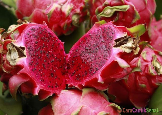 manfaat buah naga merah untuk kesehatan tubuh