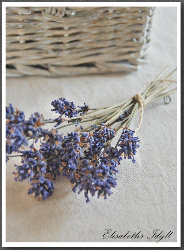 Lavendel tørket
